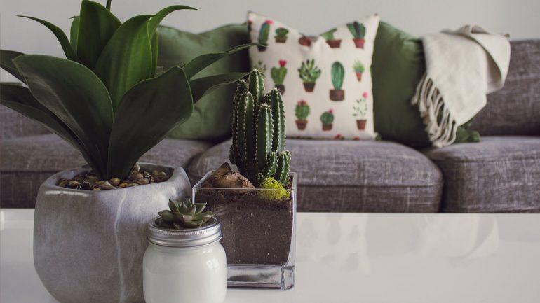 Všetko čo potrebujete vedieť, ak si plánujete založiť domácu kaktusovú záhradu