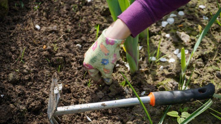 práca v záhrade
