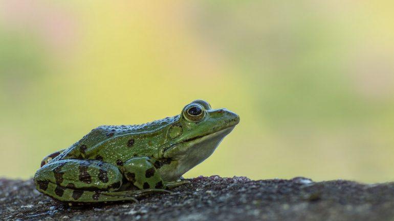 Žaby vo vašej záhrade: Škodca alebo prospešný obyvateľ?