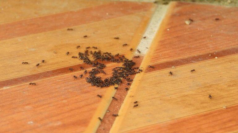 Najlepšie prírodné spôsoby, ako sa zbaviť mravcov