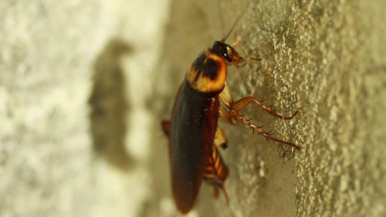 Ako sa zbaviť švábov prirodzene a lacno