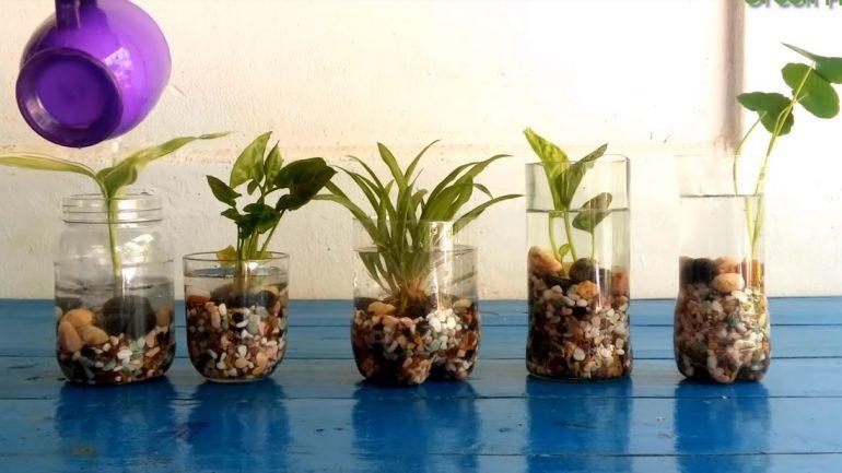 Ako si založiť záhradku bez pôdy a z recyklovaného materiálu