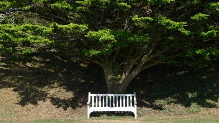 lavička pod stromom