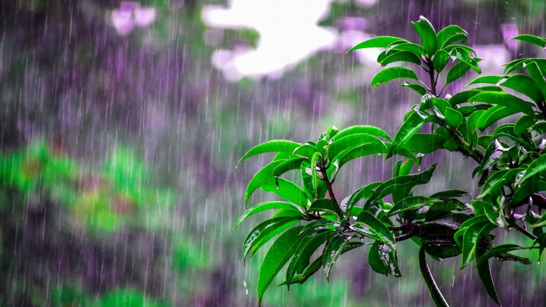 dážď v záhrade