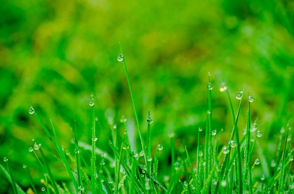 voda na tráve