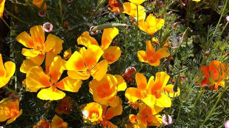 5 rastlín, ktoré prosperujú aj v období sucha