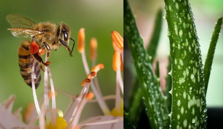 pomoc pri štipnutím hmyzom