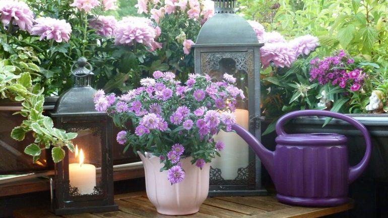 Rozžiarte svoj balkón aj na jeseň, tieto kvety to dokážu