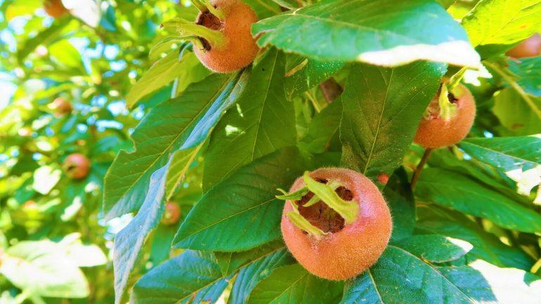 Vysaďte si netradičné hity tohtoročnej záhradkárskej sezóny