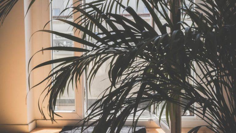 Spestrite si sychravé počasie kúskom leta! Ako pestovať palmy doma?