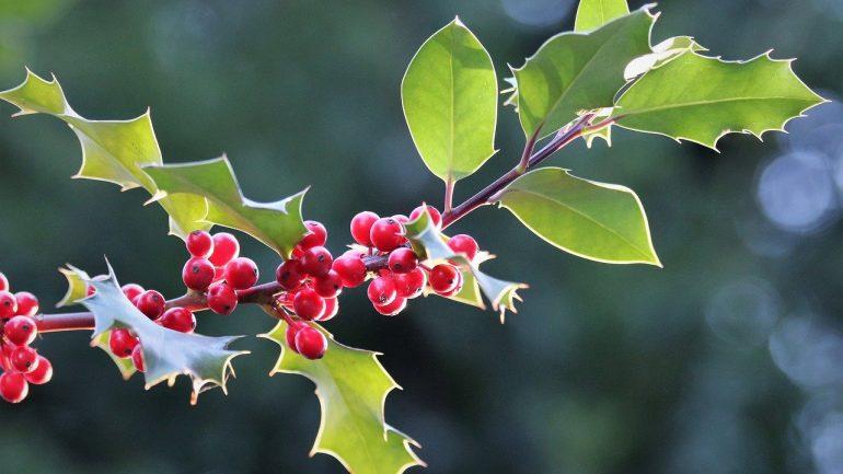 6 druhov zimných kvetov – I. časť