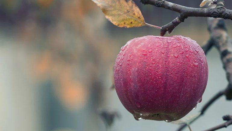 Ako správne zazimovať ovocnú záhradu?