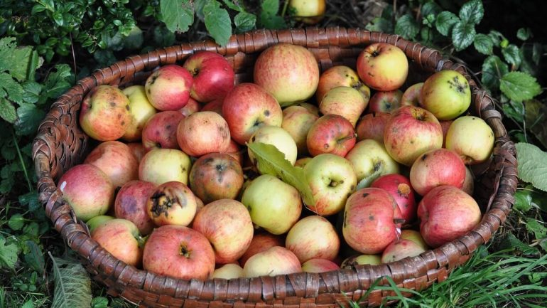 jablká, jeseň