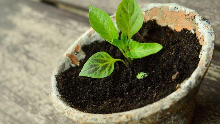 Tipy pôdy, ktoré potrebujete pre svoje izbovky