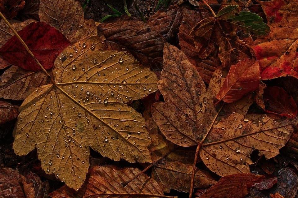lístie jeseň