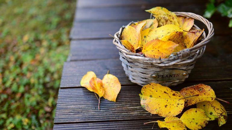 5 tipov pre krásnu neskorú jesennú záhradku