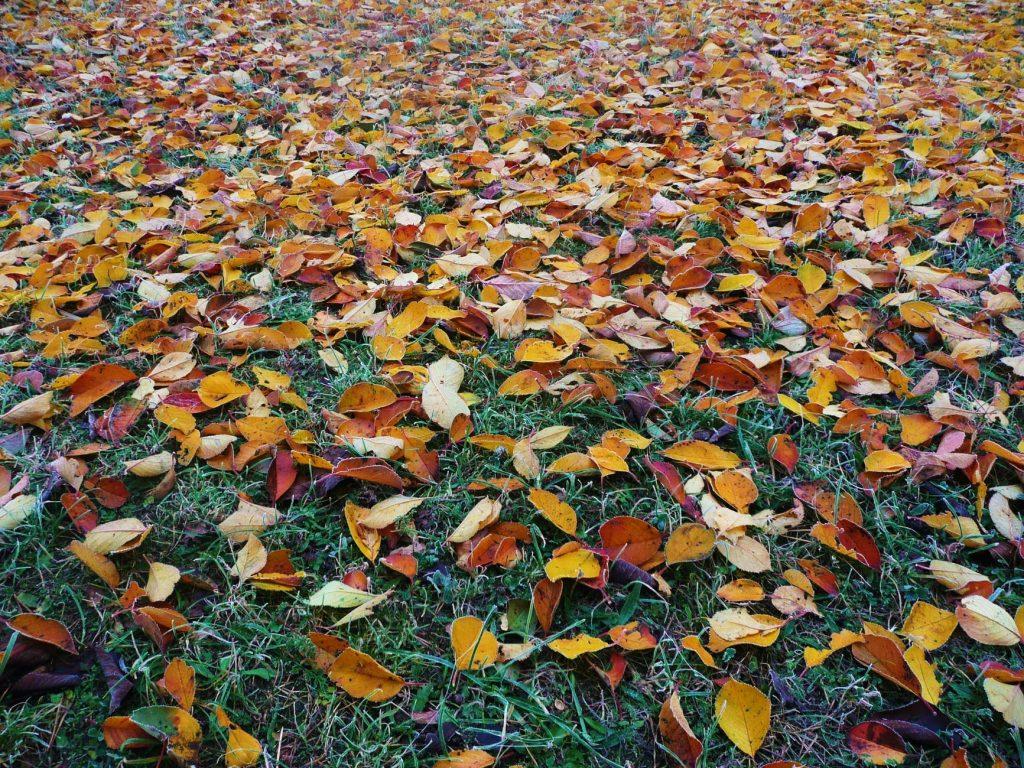 listy na trávniku