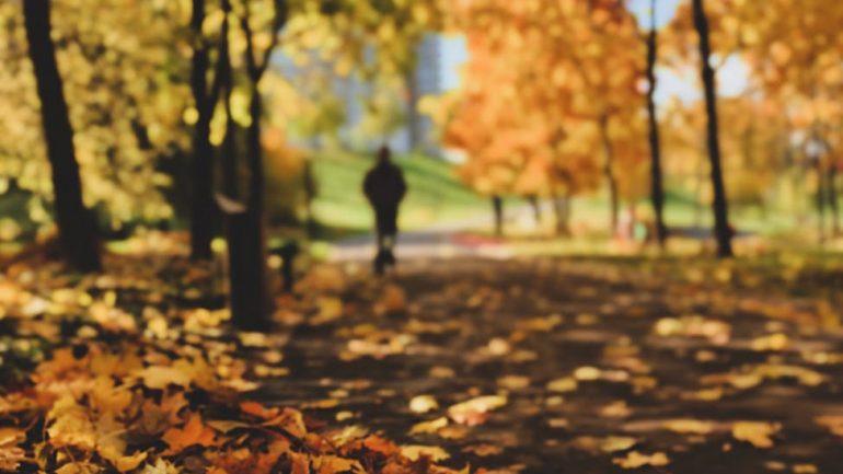 Užite si jeseň – hviezdne obdobie javorov