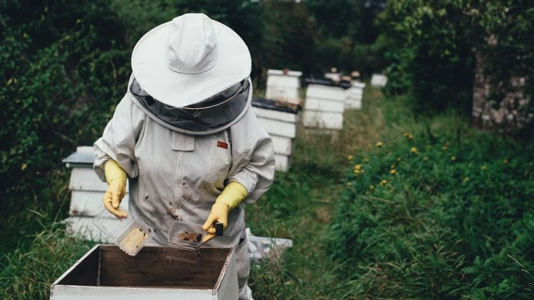 Ako začať chov včiel? Spoznajte 10 dôležitých zásad