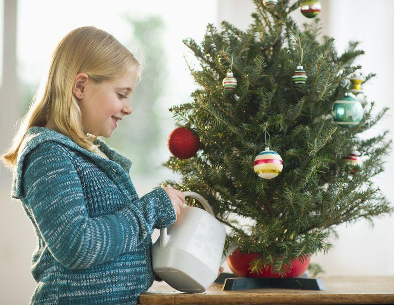zavlažovanie vianočného stromčeka
