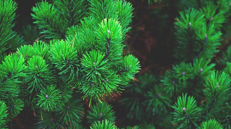 celoročný vianočný strom