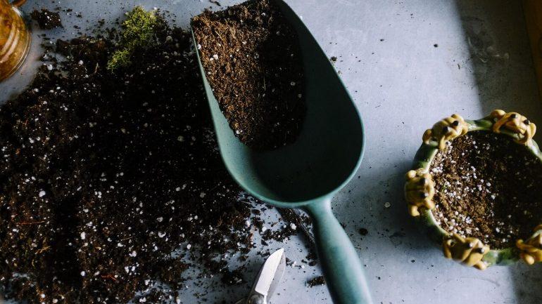 Aké živiny v pôde sú nenahraditeľné pre rastliny v záhrade