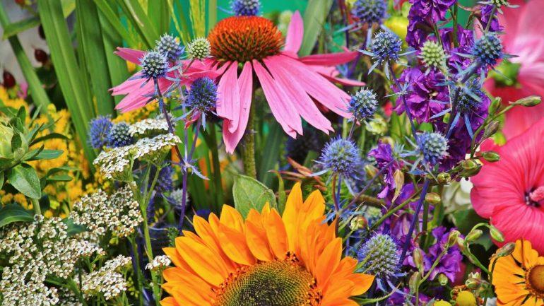 Táto krásna trvalka dokáže s vašim zdravím zázraky, máte ju vo svojej záhrade?