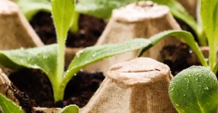 pestovateľské triky, ktoré ocení každý záhradkár