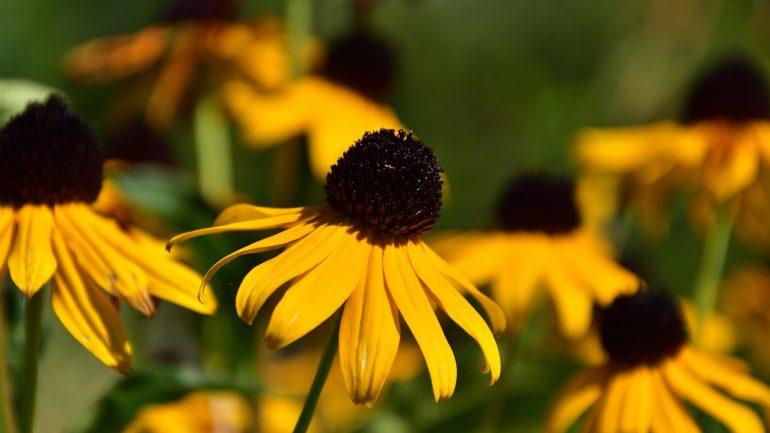 Malá záhrada: Praktické tipy, ako ju správne naplánovať