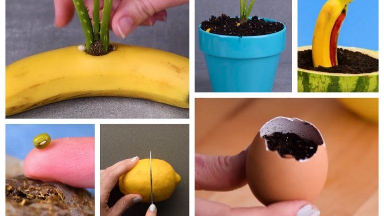 pestovatelske triky