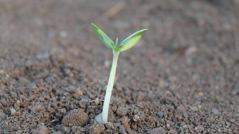 zem, rastlina