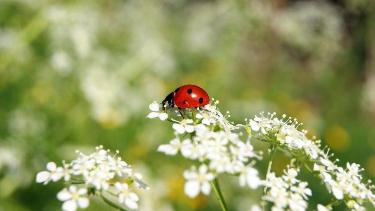 Ako bojovať so škodcami? Prilákajte na záhradu týchto 10 pomocníkov