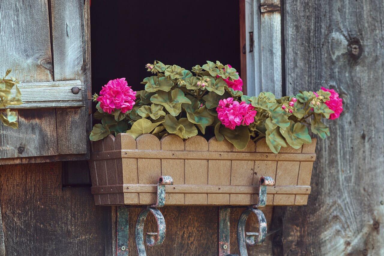pestovanie kvetov v nádobách