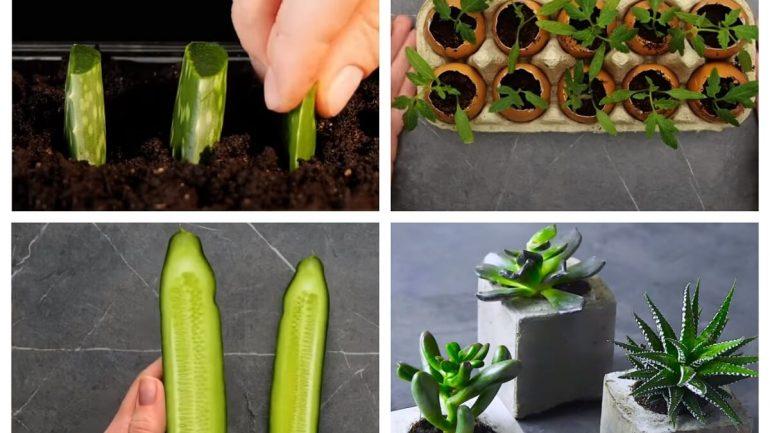 VIDEO: Jednoduché spôsoby, ako si doma dopestovať sadenice a semená