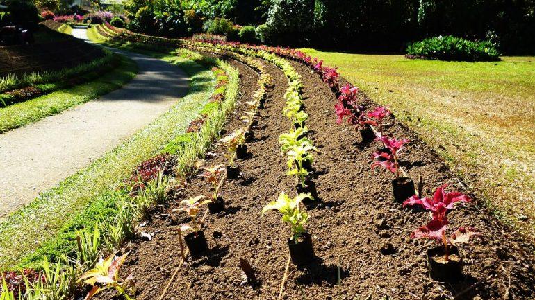 Ako sadiť s výsevným pásikom
