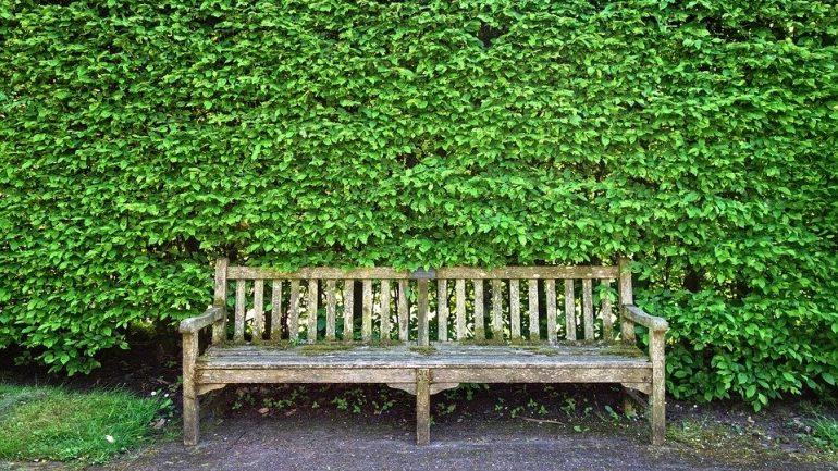živý plot - súkromie na záhrade