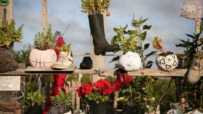 Nápady, ako na pestovanie rastlín v topánkach