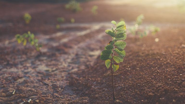 druhy zeme, záhrada, pôda