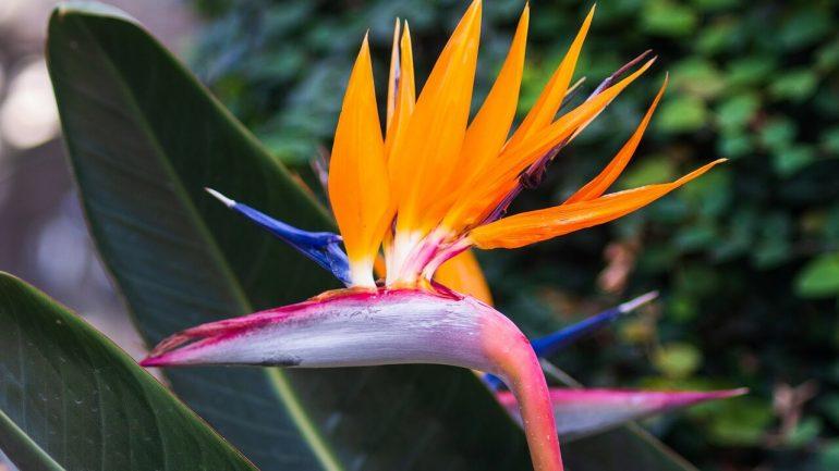exotické kvety na záhrade