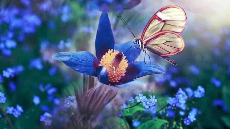 ako vytvoriť záhradu pre motýle