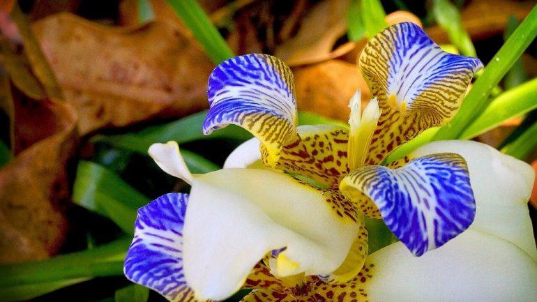 V čom spočíva tajomstvo krásy orchideí?