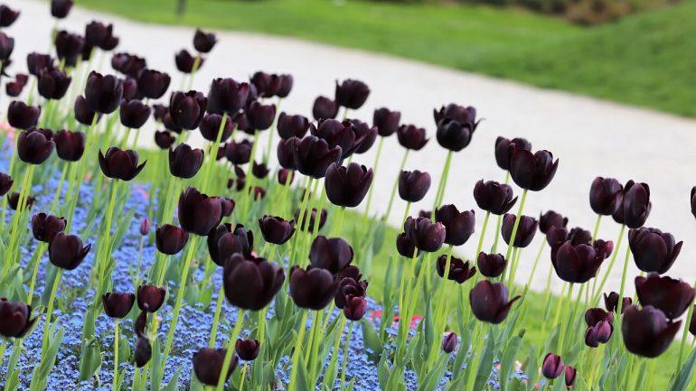 Čierne kvety na vytvorenie kontrastu, časť I.
