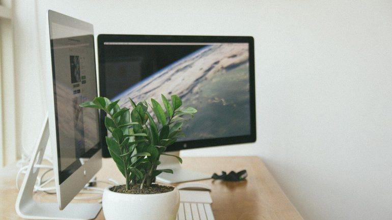vhodné rastliny do kancelárie