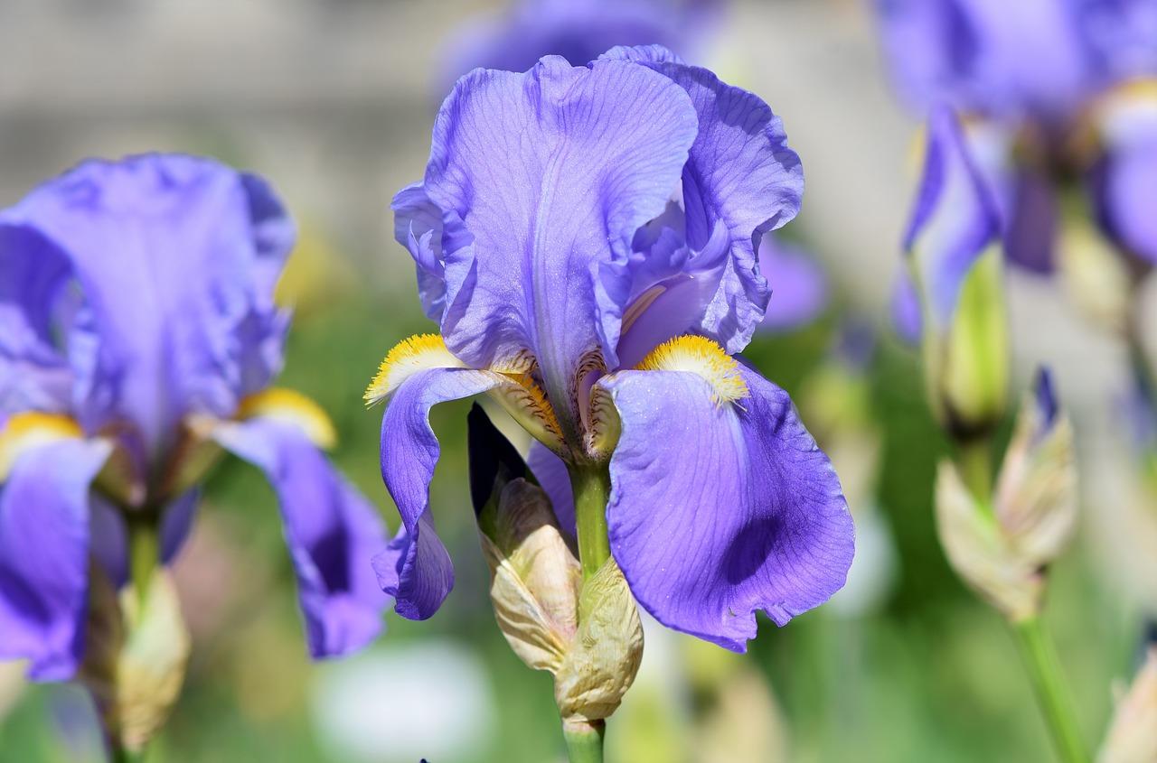 pestrofarebné kvety
