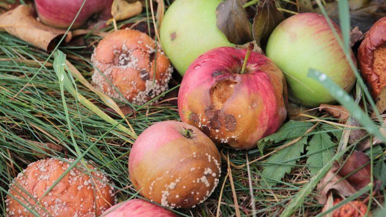 Choroby jabĺk: Na tieto problémy si dajte pozor