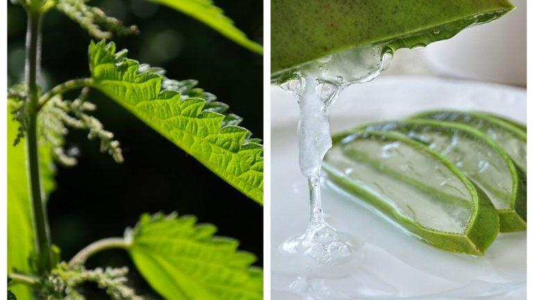 Liečba akné: 6 rastlín, ktoré ho pomôžu odstrániť