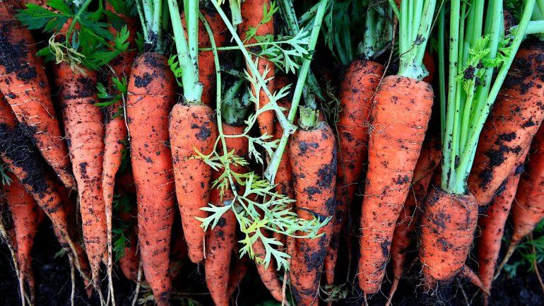 Ako a kedy zbierať najčastejšie pestovanú zeleninu