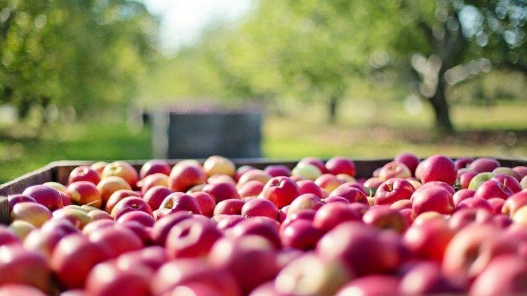 Zber jabĺk: 9 zásad, ktoré treba dodržať