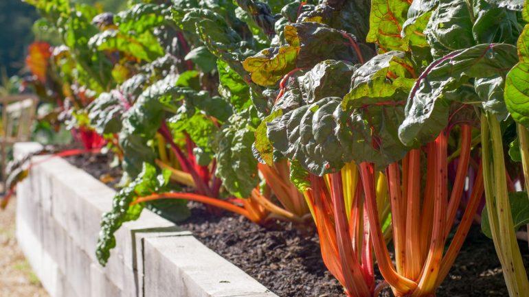 Vyvýšená zeleninová záhrada