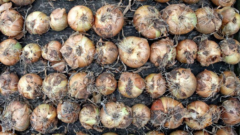 sušená zelenina
